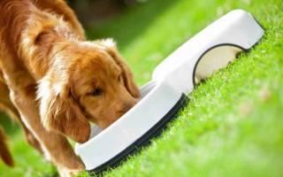 Какие существуют российские корма для собак