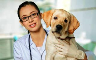 Стерилизация собак: за и против