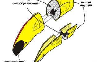 Как называется попугай с большим клювом и чем он питается