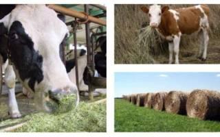 Питание коровы: сколько сена нужно корове
