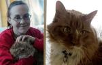 Коты-герои, которые спасли жизнь человеку