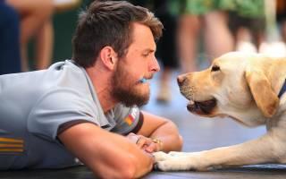 Соотношение возраста собаки и человека