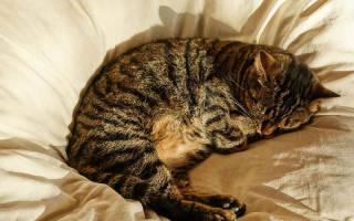 Сколько часов в сутки спят коты