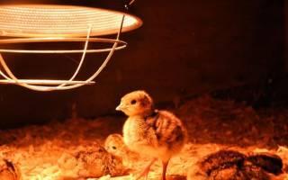 Инфракрасная лампа для цыплят и ее применение