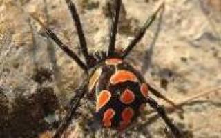 Органы чувств у пауков