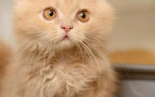 Запор у кота, что делать, если кот не может сходить в туалет