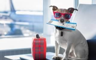 Справка для перевозки собак по воздуху