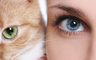 Как кошки видят цвета