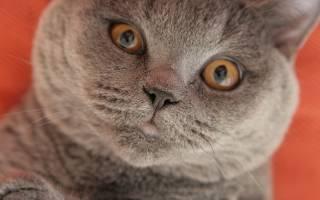 Правильная когтеточка для кошек: маленькие хитрости