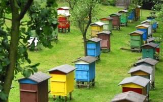 Пчелы и пасека в Крыму: рентабельность