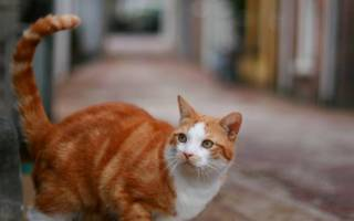 Как найти пропавшую кошку