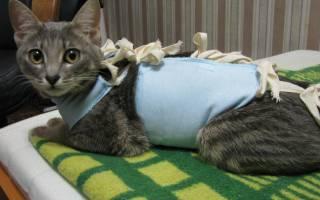 У кошки разошелся шов после стерилизации: помощь ветеринара