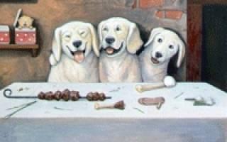 Выбираем вкусный корм для привередливых собак