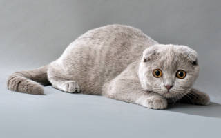 Как правильно гладить кошку