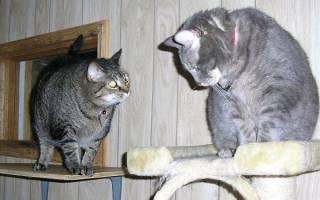 Кот или кошка кого выбрать: определяющий фактор