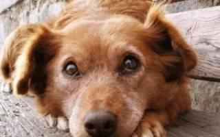 Разбираемся, почему щенок боится улицы и помогаем ему преодолеть страх