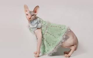 Одежда для кошек: выкройки можно построить самим!