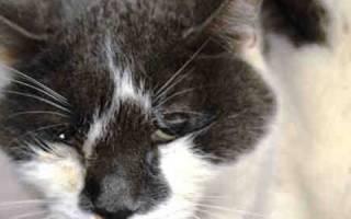 Как выявить обезвоживание у кошки