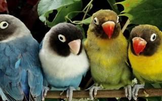 Решаем, какого попугая лучше купить