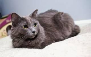 Как улучшить шерсть у кошки