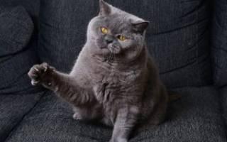 Когтерезка для кошек для ухода за когтями
