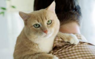 Почему коты мнут лапами