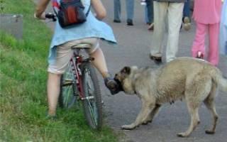 Ультразвуковой отпугиватель собак, как выбрать