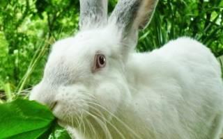 Что давать кроликам: список запрещенных продуктов
