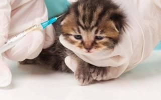 Как сделать привику котенку самому
