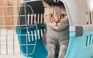 Как вывезти кота за границу