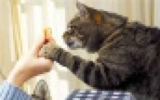 Как правильно кормить кошку натуралкой