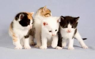 Самые популярные окрасы кошек: рейтинг