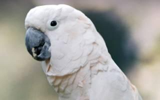 Редкие виды попугаев