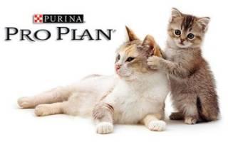 Проплан для котят: правильное питание ваших питомцев