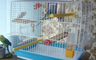 Что нужно попугаю в клетке