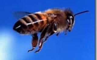 Уроки пчеловодства для начинающих