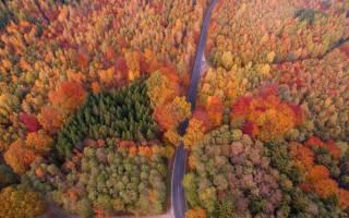 Растения и животные широколиственных лесов
