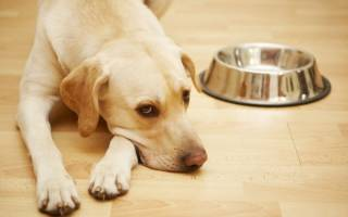 Старая собака не пьет воду