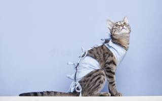 Когда снимать попону с кошки после стерилизации, как ухаживать за кошкой
