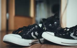 Какой породы могут быть кошки черного цвета