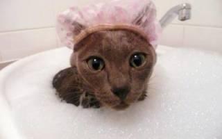 Шампунь для кошек от перхоти содержит активные вещества