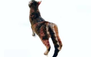 Как определить, что кошка гуляет