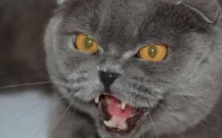 Как успокоить агрессивную кошку