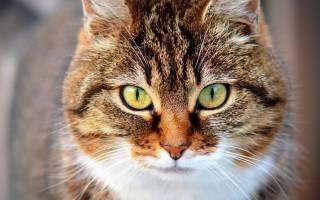 Как долго растут кошки