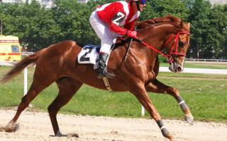 Породы скаковых лошадей: английская скаковая лошадь