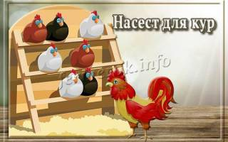 Насесты и гнезда для кур: правильный насест для кур