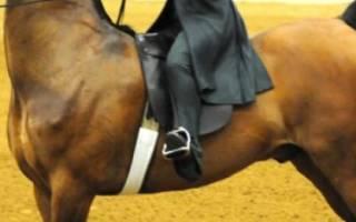 Особенности содержания американской верховой лошади