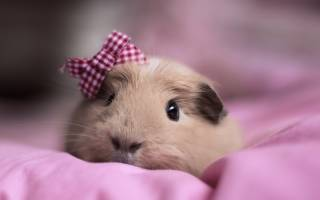 Как назвать свинью: красивые имена для свиней