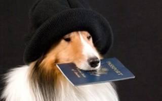 Как получить паспорт на собаку
