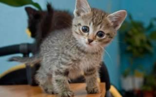 Как лечить рахит у котят